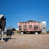 horse goat wagon