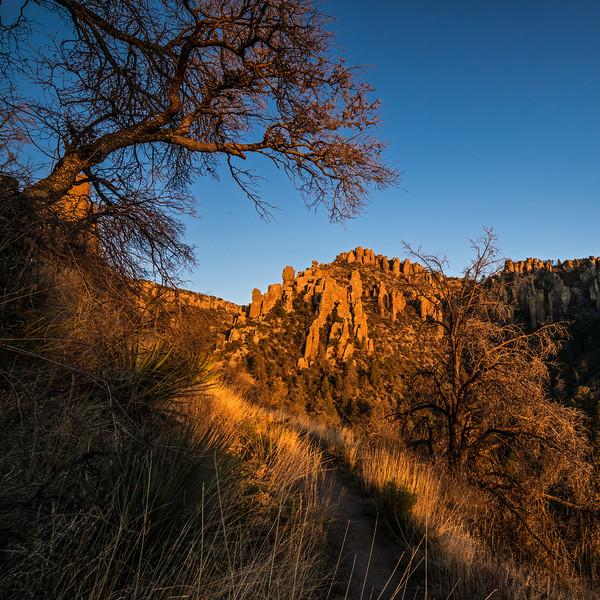 late-day glow Ed Riggs trail Chiricahua