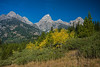 aspens in the Grand Tetons 2