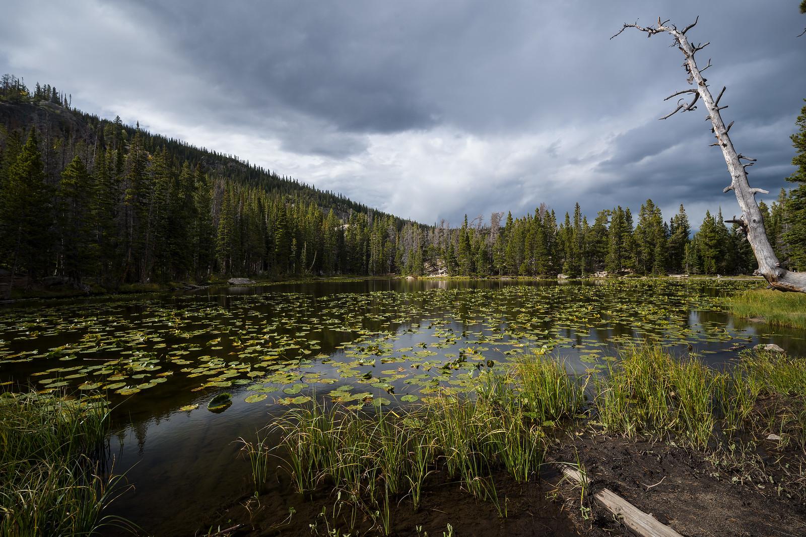 Nymph Lake Rocky Mtn National Park