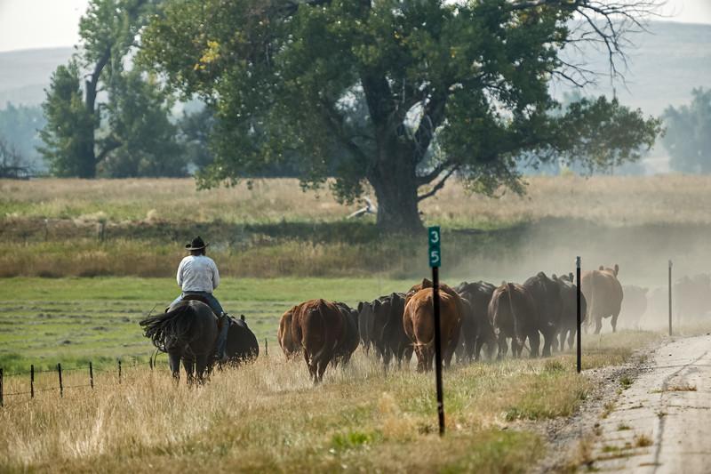 dusty roadside with cowboy