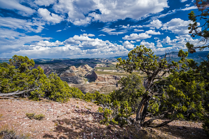sky canyon trees Dinosaur National Monument CO