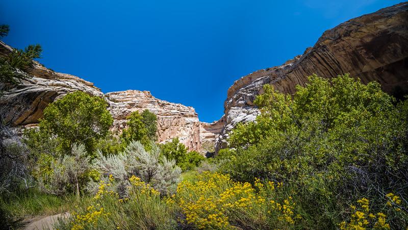 Box Canyon panorama