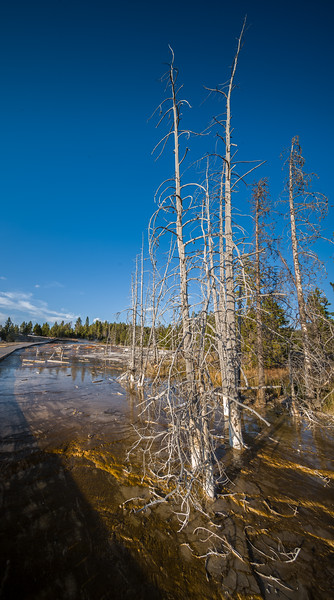 Fountain Paint Pot Nature Trail Yellowstone