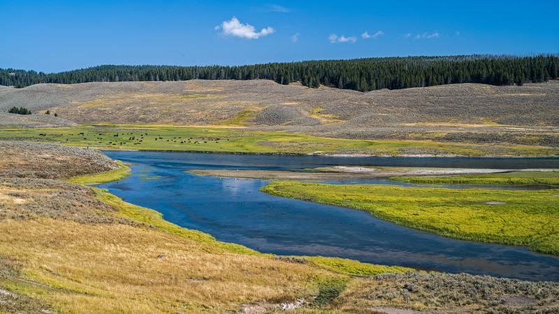 Yellowstone River valley with swans and buffalo