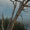 Dead tree overlooking the Snake River