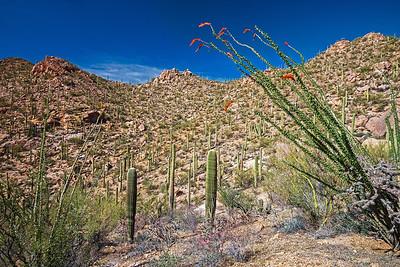 beautiful Saguara National Monument