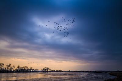 lines and flocks of Sandhill Cranes at dusk above Platte River