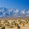 Organ Mountains 1