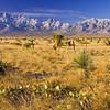 cactus & Organ Mountains