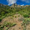 prickly pear cactus & Organ Mountains