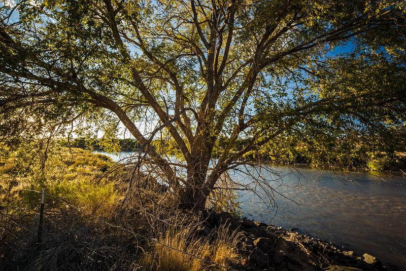 backlit tree against Rio Grande