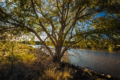 backlit tree against Rio Grande