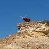 bull sculpture near Chaco Culture National Historic Park