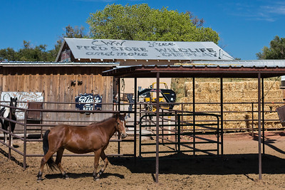 Blatz Beer sign & horse @ CWW Feed Store and More