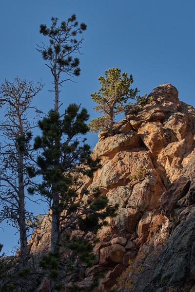 Cliff top tree