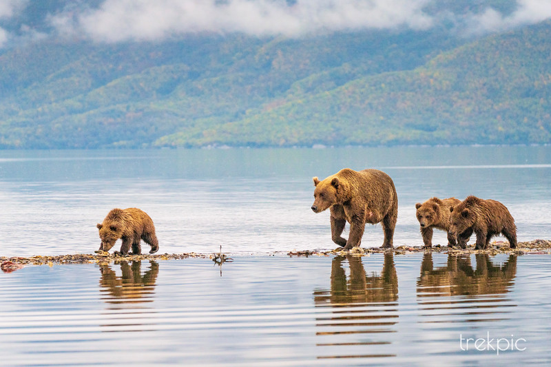 Grizzly Four at Water's Edge