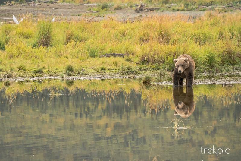 Mirror Bear