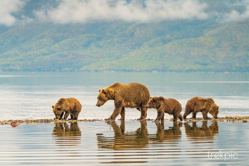 Grizzly Four at Water's Edge 3