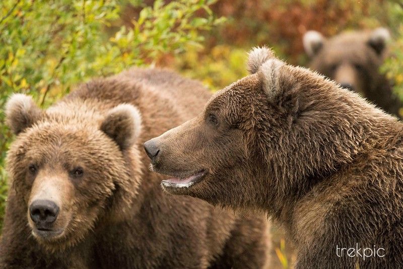 Cubs on the Trail 2