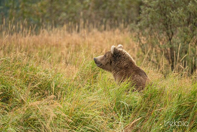 Bear Grass 2