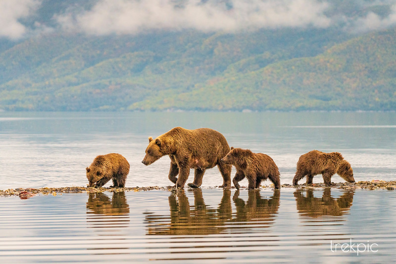 Grizzly Four at Water's Edge 2