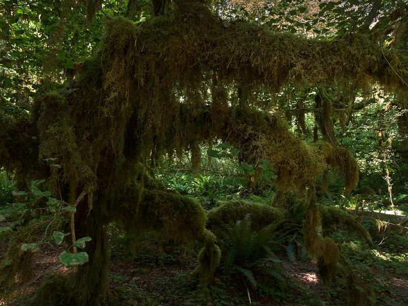 Mossy Tree Limbs