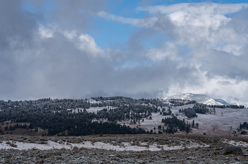Winter on the Buffalo Plateau