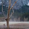 Ghost meadow