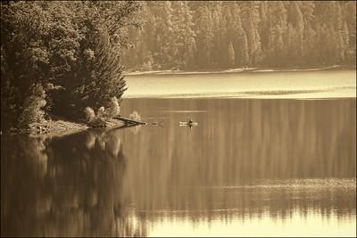 Serenity at Sugar Pine