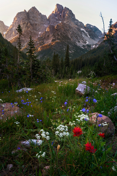 Wildflowers of Cascade Canyon