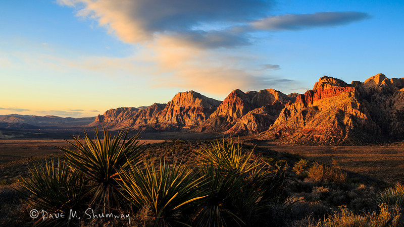 The sun rises on a cluster of Yucca in Red Rock Canyon, outside Las Vegas, NV. Captured with a Canon 5D III and 17-40/4.0L in aperture priority mode with an exposure bias of + 2/3 at ISO200, f/16, and 1/15 of a second. The camera was mounted on a Gitzo 3540 XLS tripod with an Arca-Swiss Z1sp ballhead.