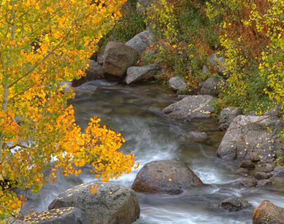 Bishop Creek Fall Colors