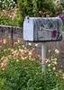 Palouse Mailbox