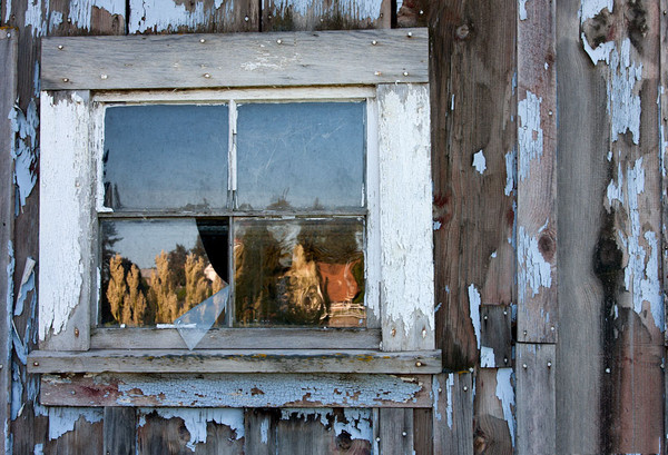 Palouse Window