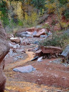 Taylor Creek, Kolob section Zion National Park