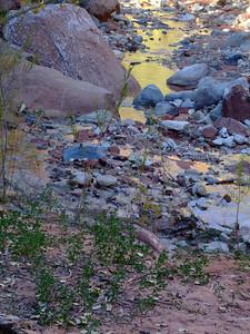 Taylor Creek, Kolob