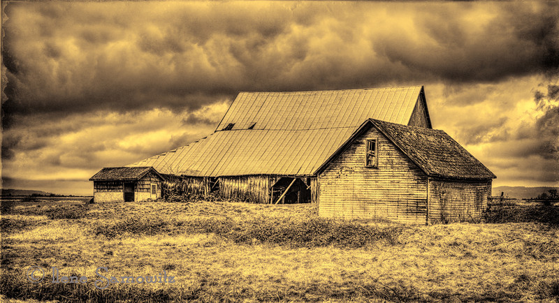 4-5-13 Skagit Barn - I like this barn and have shot this repeatedly. I reprocessed this photo, cropped it, toned it and added a texture from Fly Paper Tintype Collection.
