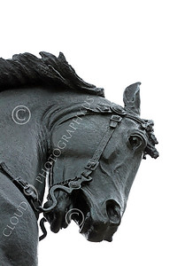 STY - MGGACUSTER 00023 Close up of Maj Gen George Armstrong Custer's horse's head, by Peter J Mancus