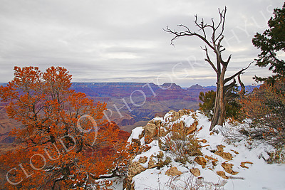 SCGNP 00026 Part of the Grand Canyon in winter under an overcast sky with a red leaf tree, by Peter J Mancus