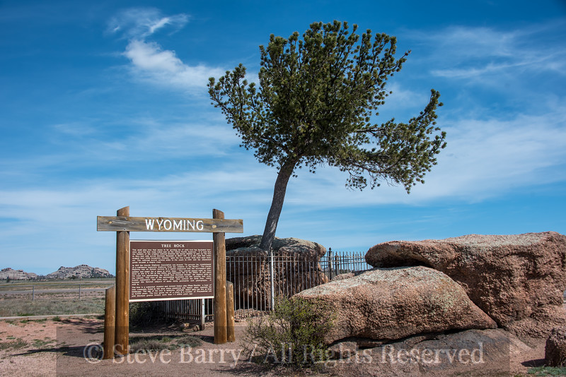 Wyoming<br /> Buford<br /> Tree in a rock