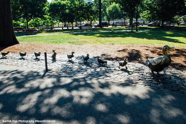 Make Way for Ducklings, Boston Public Garden, Boston, Massachusetts