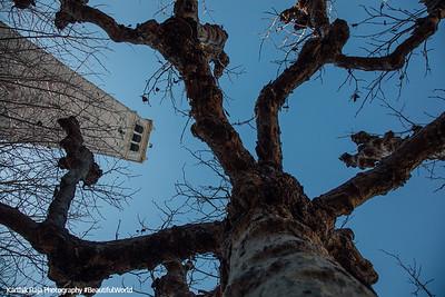 Campanile Esplanade, Sather Tower, Berkeley, California