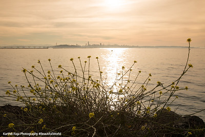 Cesar E Chavez Park, McLaughlin Eastshore State Park State Seashore, California