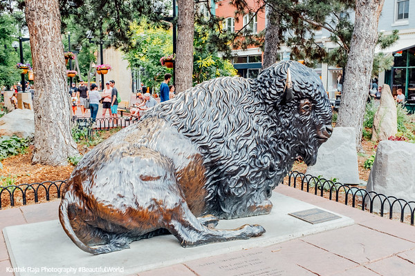 Buffalo, Pearl Street, Boulder Colorado