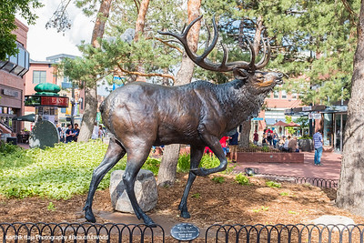 Elk, Pearl Street, Boulder Colorado