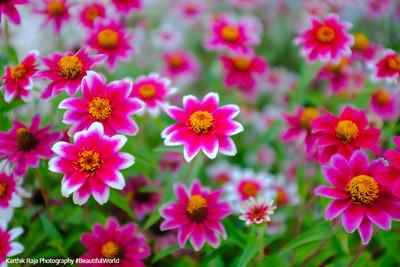 Flowers, Glencoe Beach, Lake Michigan