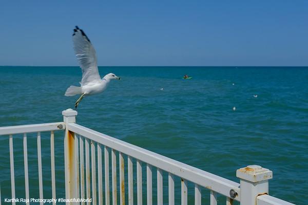 Seagulls in flight, Glencoe Beach, Lake Michigan