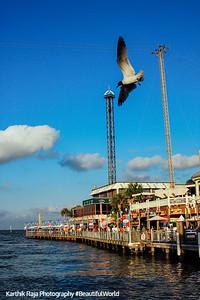 Bird in Flight, Kemah Boardwalk, Gulf of Mexico, Texas