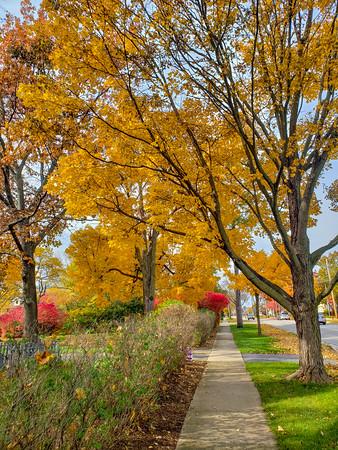 Palaitne Illinois Fall Colors